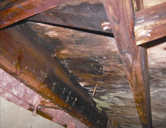 mold and rot in a Greenville crawl space