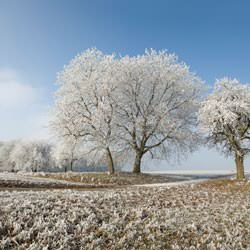 Frost covering trees and a grassy field in Belton