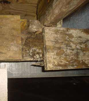 Extensive basement rot found in Spartanburg by All-Dry of the Carolinas