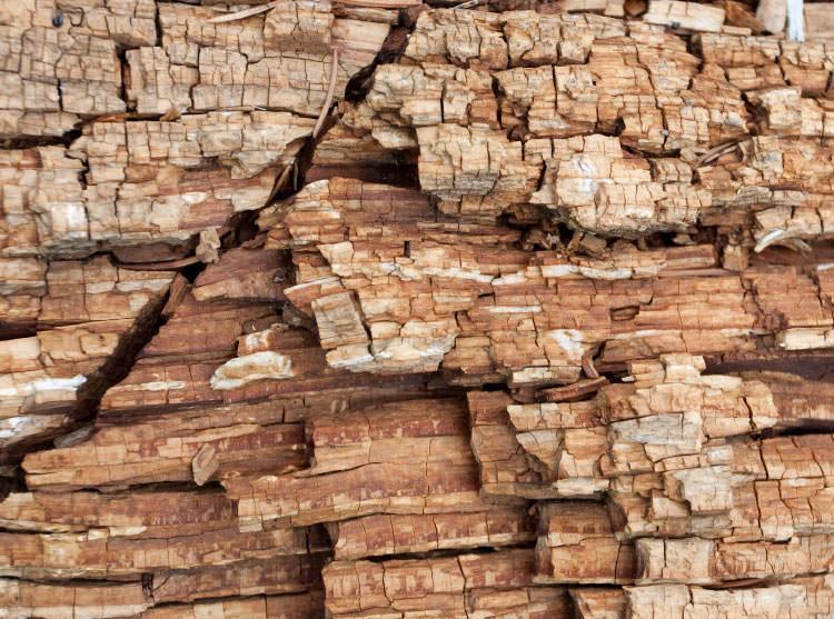how to kill wood rot fungus