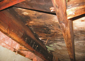 Extensive crawl space rot damage growing in Pickens