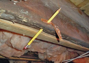 Destroyed crawl space structural wood in Brevard