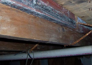 Rotting, decaying wood from mold damage in Union